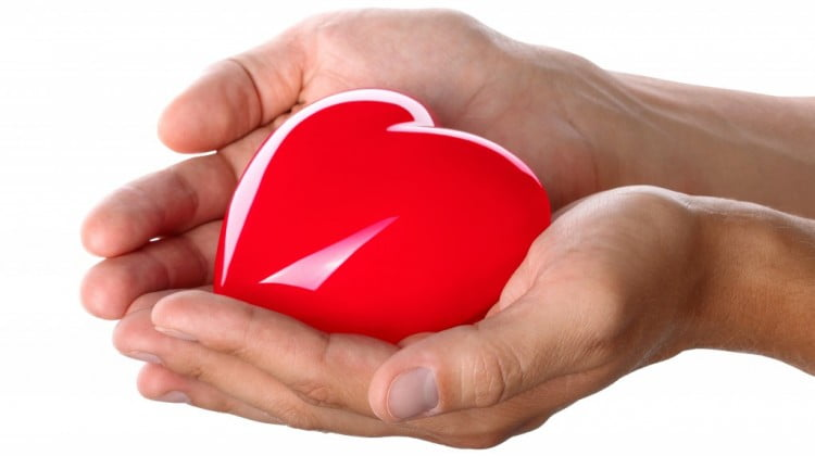 organ and tissue donation: hands holding red heart