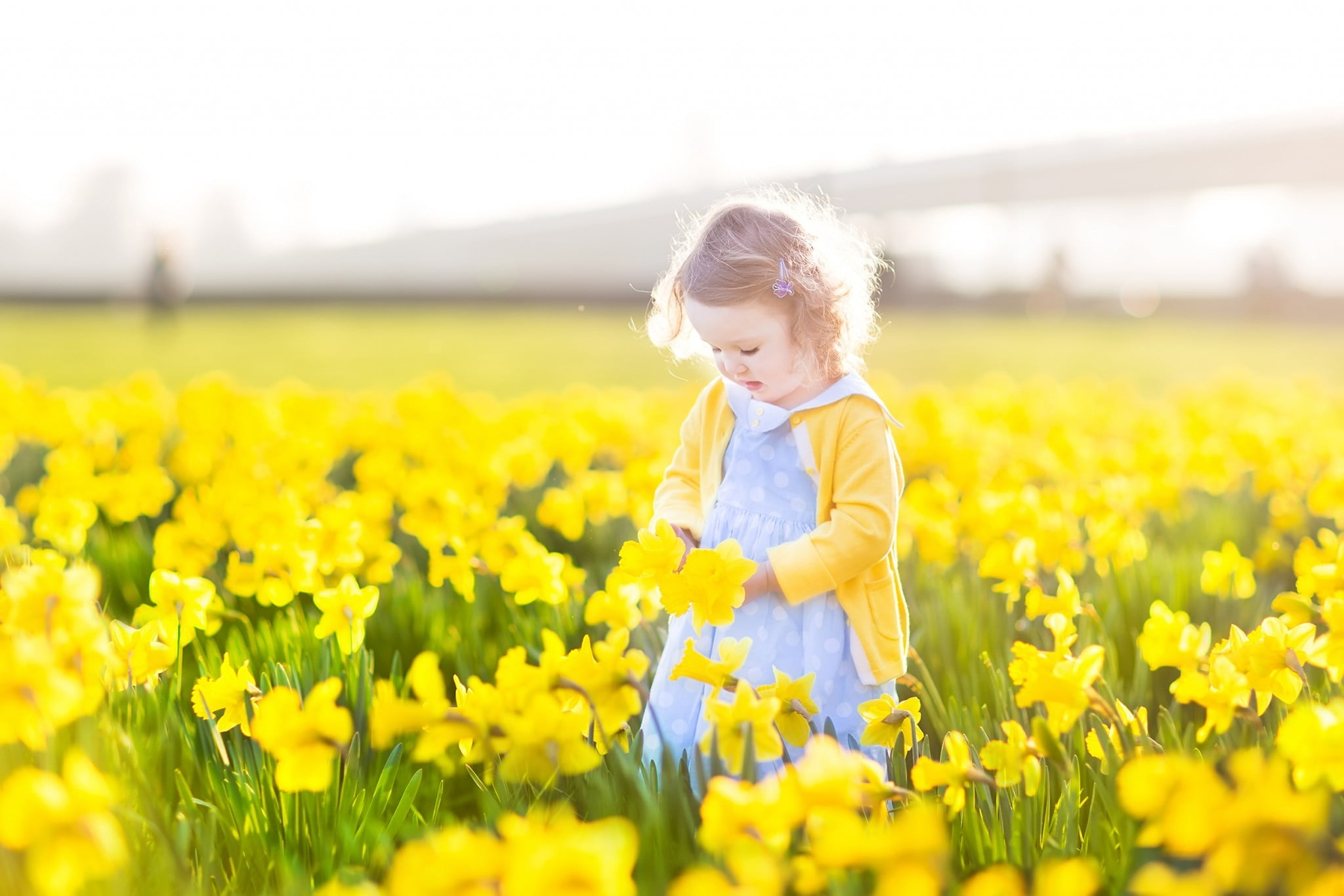 childhood cancer concept: little golden-haired toddler girl in field of daffodils