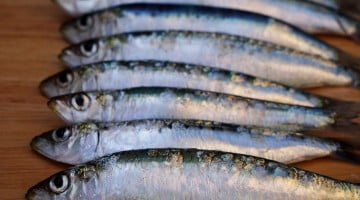 oily fish - sardines in a row