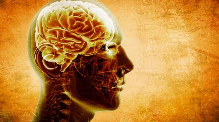 head with 3D rendering of brain in orange