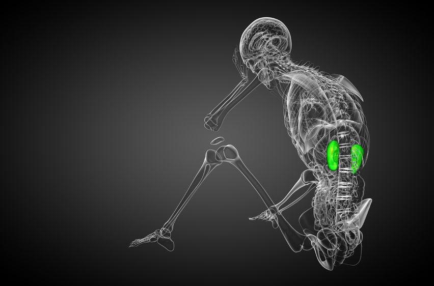 skeleton with 3D kidneys