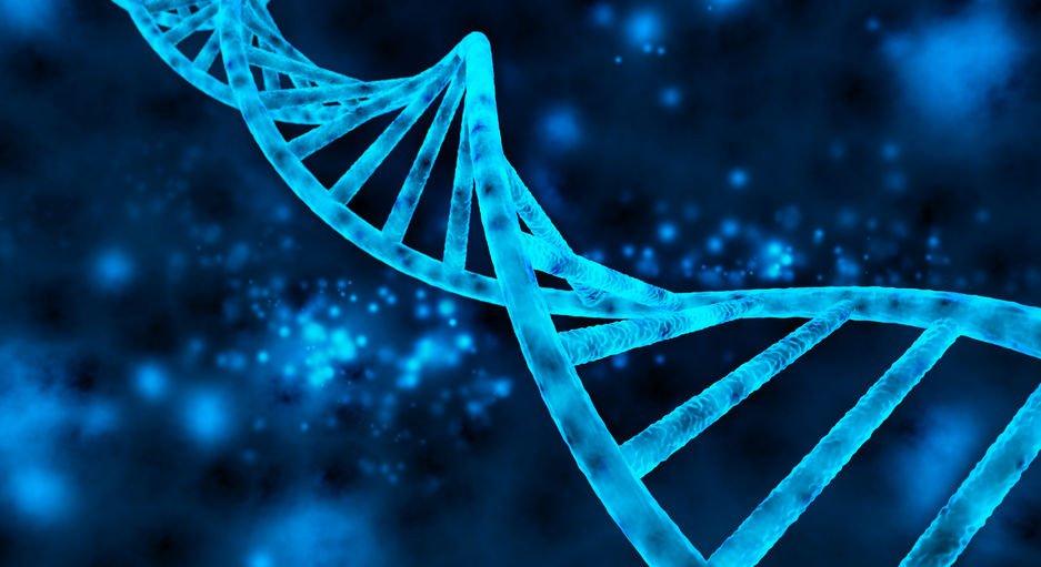 double helix (DNA)