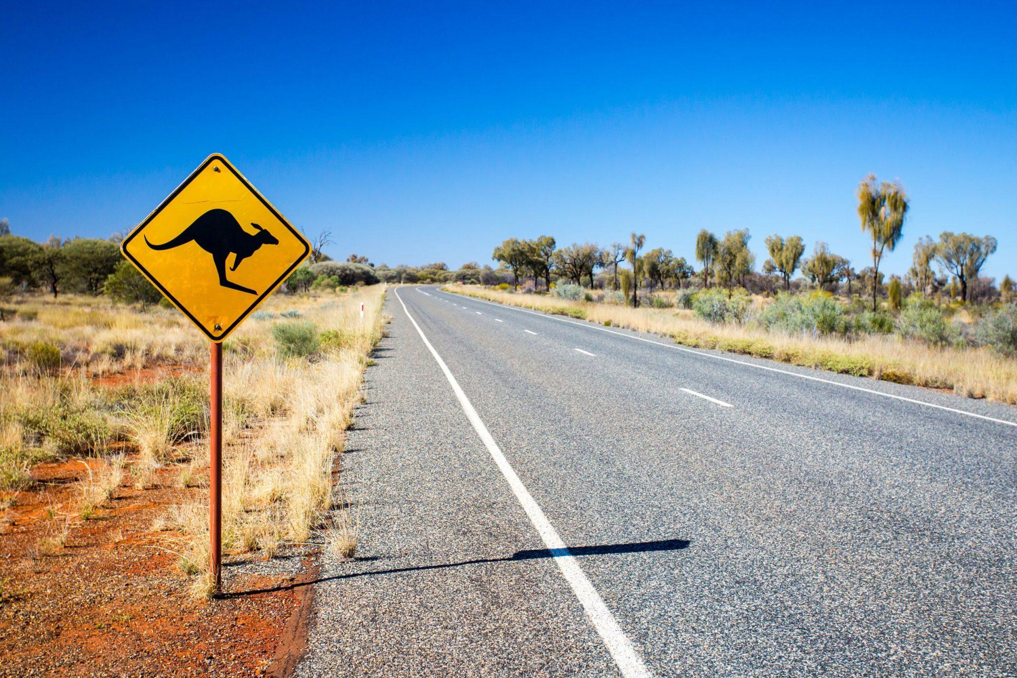 43357898 - an iconic warning road sign for kangaroos near uluru in northern territory, australia