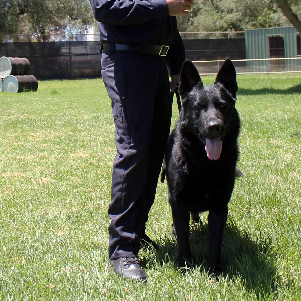 Police dog Nero. Image: SA Police, Facebook