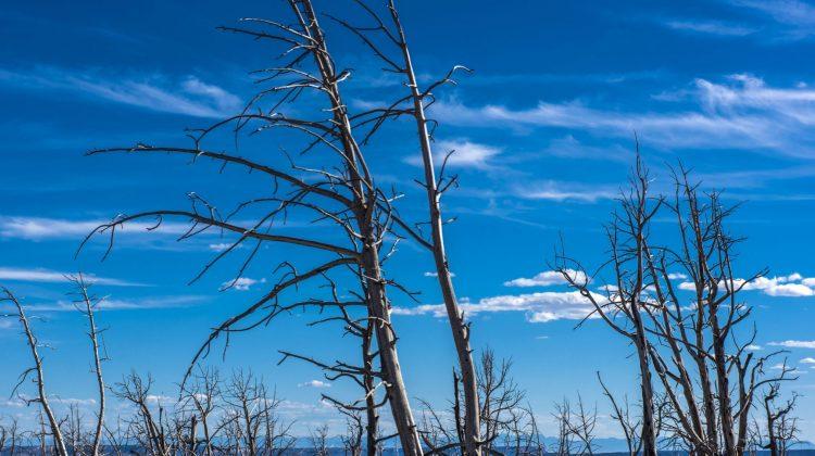 environment global warming climate change dead trees bushfire