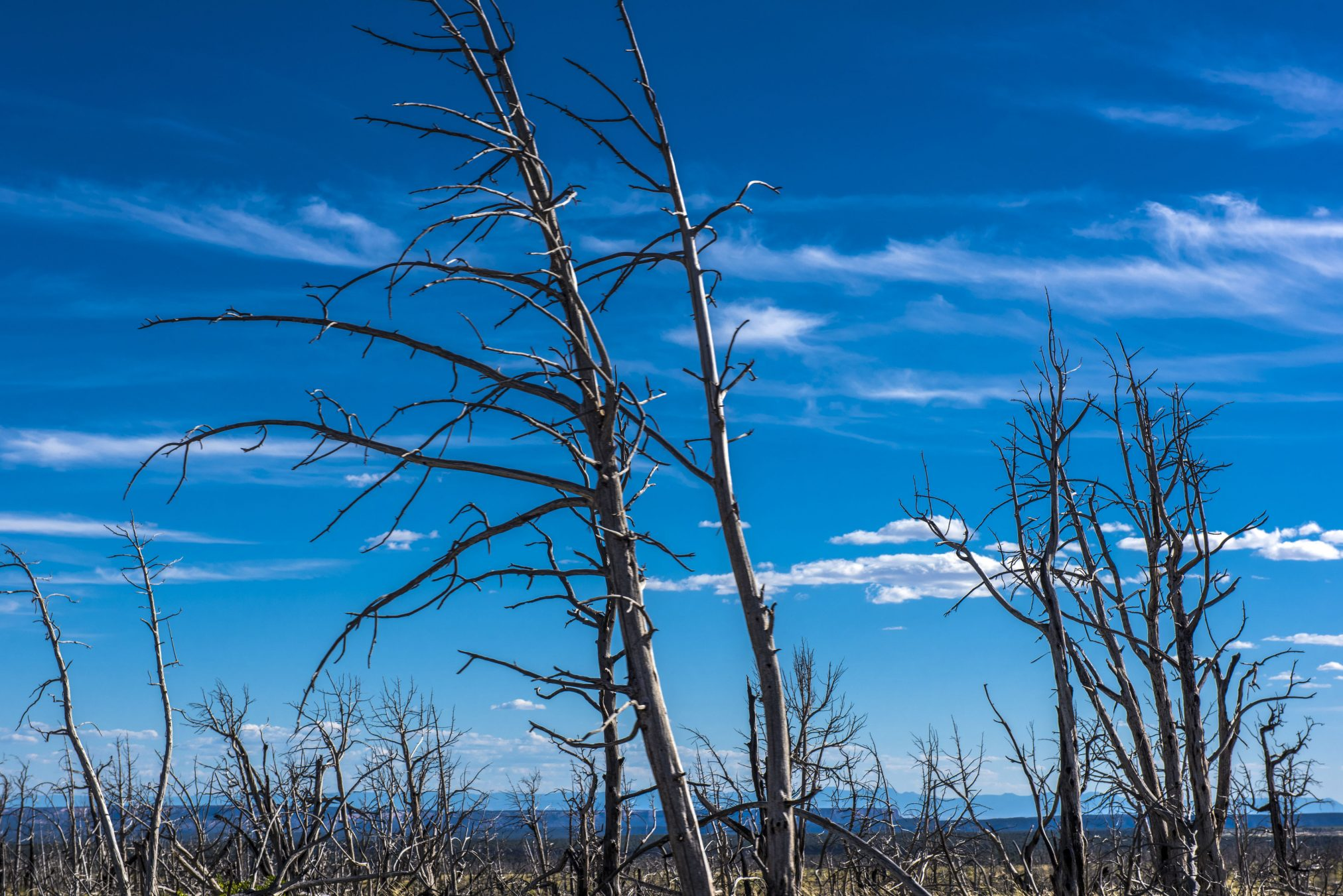 environment global warming climate change dead trees bushfire