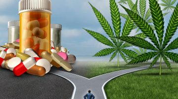At a crossroads: medicinal cannabis or opioids?