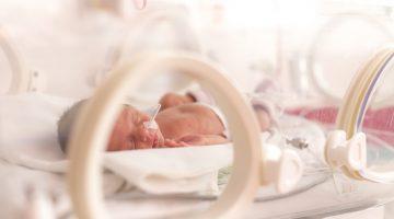 premature baby in humidicrib