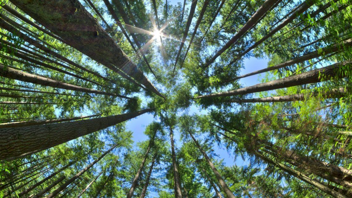 trees environment